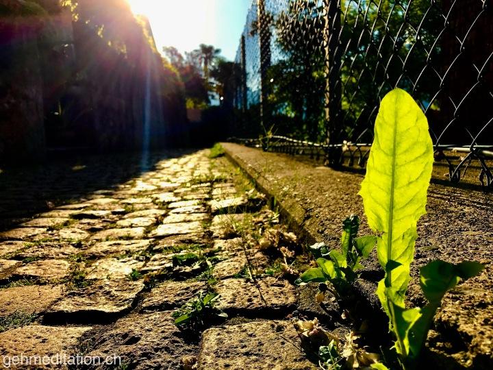 Gehe einen einfachen Weg  – aber nicht deneinfachsten